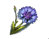 ESO ALC Corn Flower T1