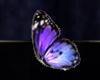 ESO ALC Butterfly Wing T1