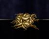ESO ALC Fleshfly Larva T1