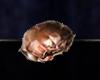 ESO ALC Mudcrab Chitin T1