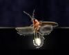 ESO ALC Torchbug Thorax T1